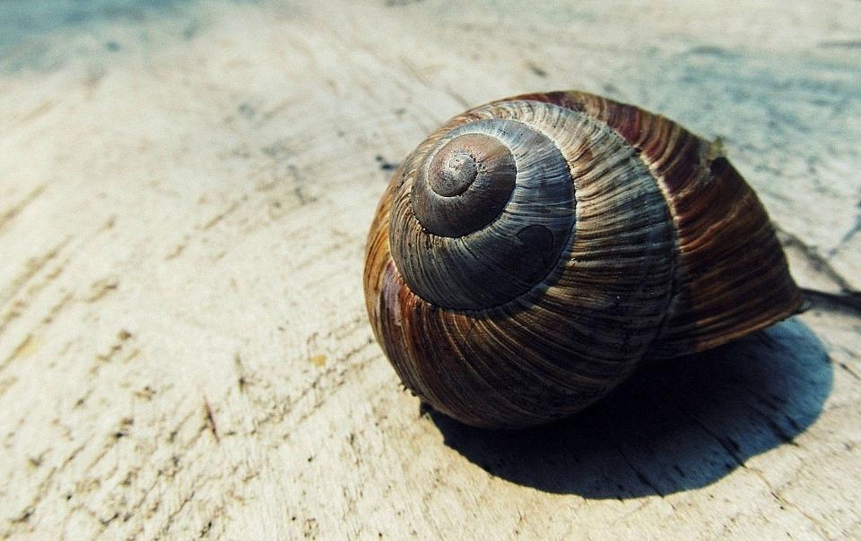 snail-shell-988766_960_720