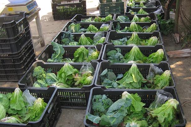 Ládás kiszerelésű biozöldségek és gyümölcsök. Forrás: Cargonomia